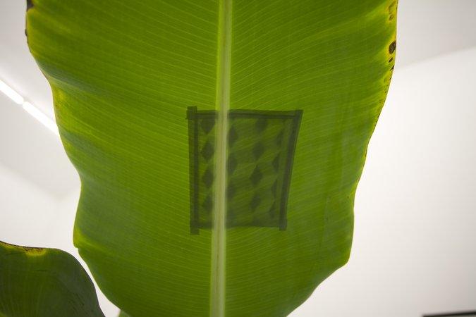 Christian Kosmas Mayer: Gizmo, 09.09. - 20.11.2009, Image 3