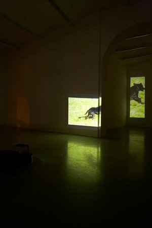 Sturtevant: The Exterior of the Interior, 14.11.2007 - 06.02.2008, Image 1