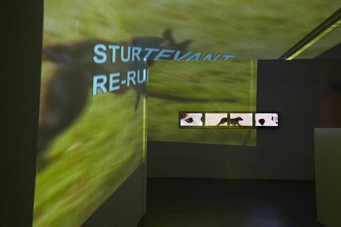Sturtevant: The Exterior of the Interior, 14.11.2007 - 06.02.2008, Image 4
